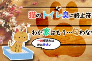 猫のトイレ臭に終止符